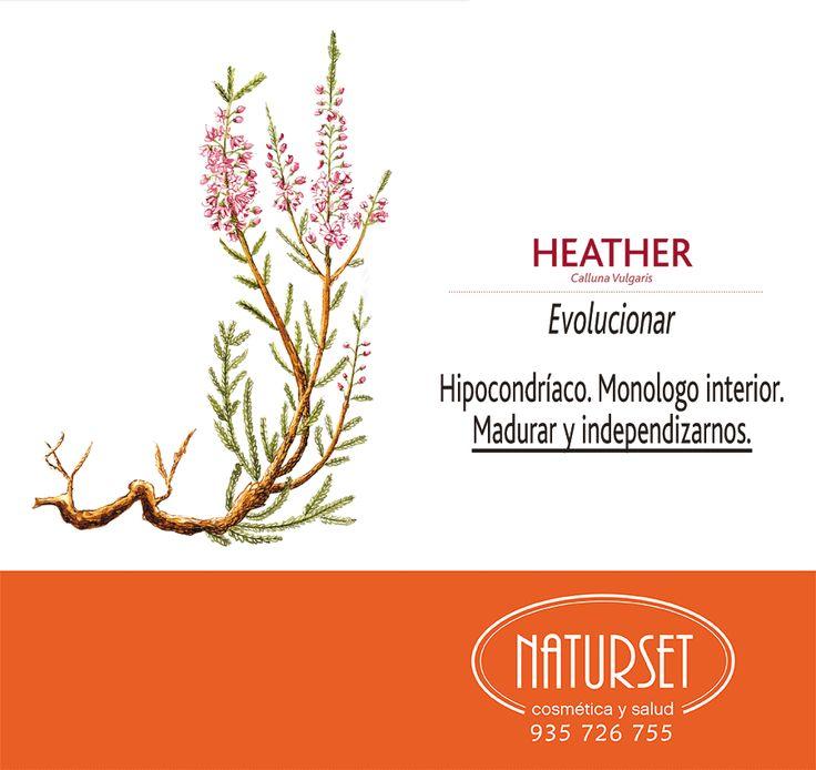 Heather Flores de Bach