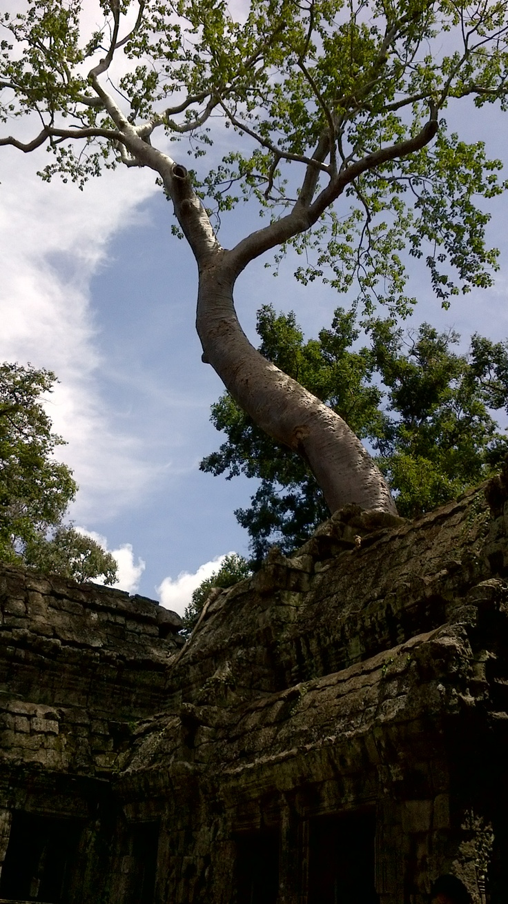 Ta Prohm Cambodia 10 best Places that
