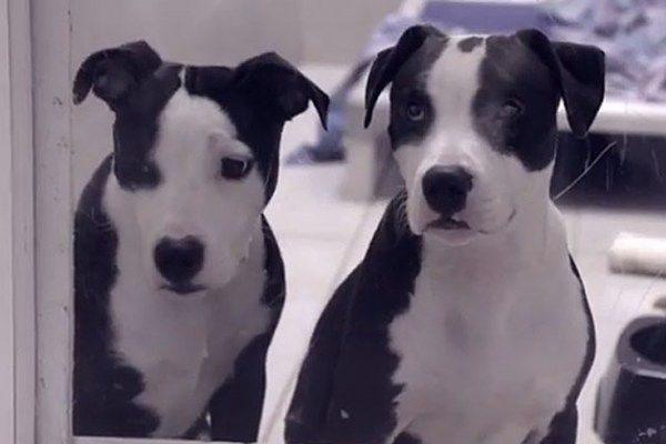 This puppy acts as a sight dog for his little puppy brother. This video... this. video.