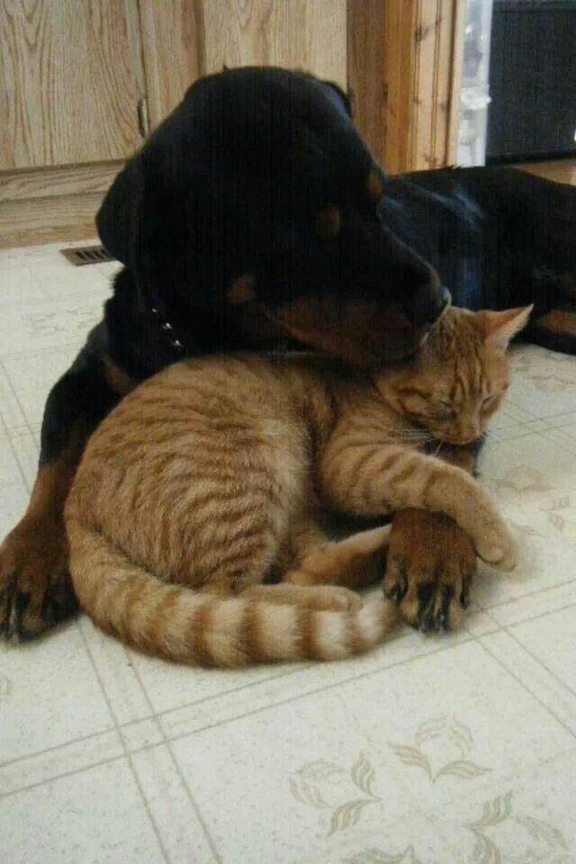 Do Cats Get Along With Dogs