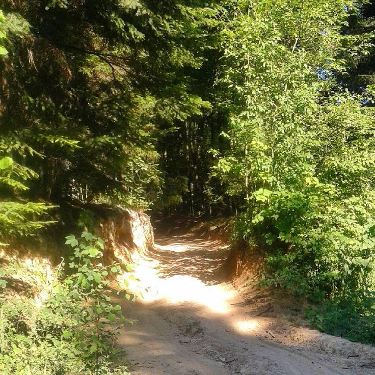 Zabratówka#polska#las#zieleń#przyroda #słońce #cień #Rzeszów #poland #forest #path #sekretgarden #nature green#sun#shadow