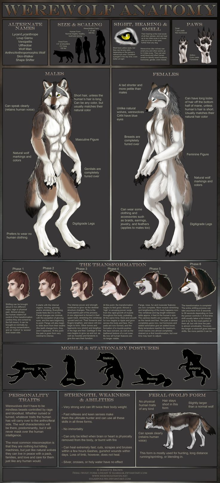 Werewolf Anatomy by =sugarpoultry on deviantART. Might use some of these as inspo for mine