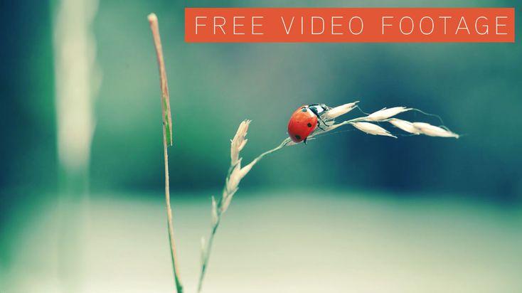 Free Ladybug video footage