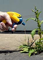 """Using Vinegar Around the Garden and to Kill Weeds. Two studies on using vinegar to kill weeds, good points and ratio's you need to know, see the """"5 Cautions."""" Plus, """"17 Ways to Use Vinegar in the Garden."""""""