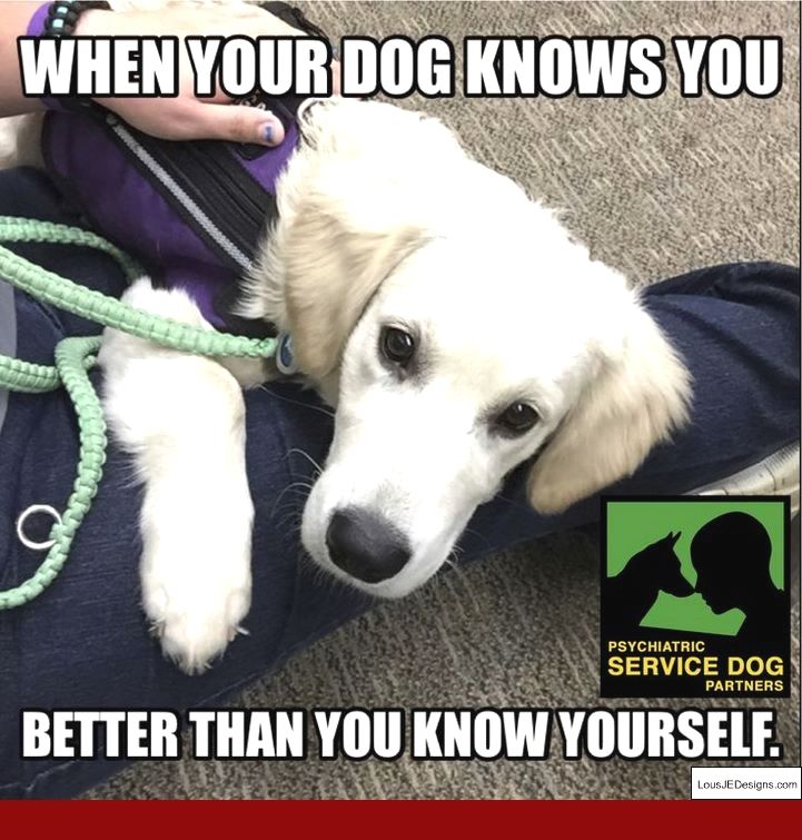 Tips On Training Squirrel Dogs And Pics Of How To Train Your Dog
