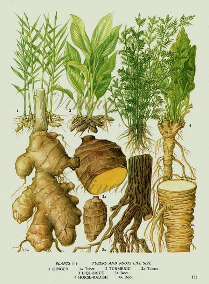Ayurveda is one of the world´s oldest science. It dates back to 3000 BC when the roots and the concept of Ayurveda has been established, by the sages of In