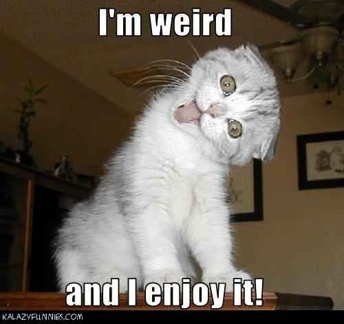 cute and funny animal pictures with captions - Google Search