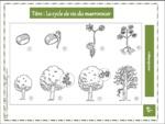 Fichier sciences (CP)/CE1/CE2   plantes + videoprojecteur