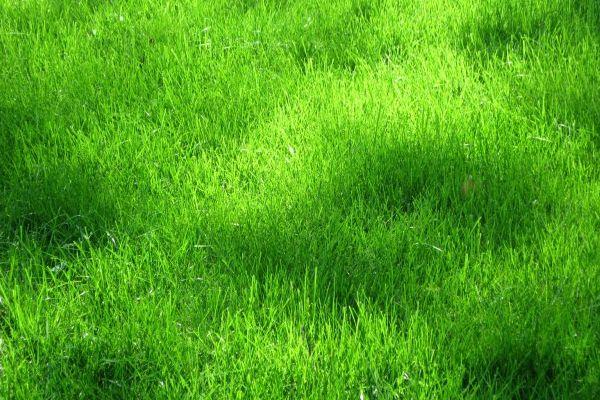 60+ Best Photoshop Grass Textures Free PSD Download | Free & Premium Templates