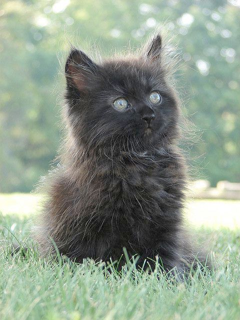 Kitty Go To Sleep Now Zzz With Images Cats Kittens Black Kitten
