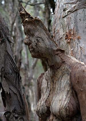 """Canadian-born, Bridgetown-based Perrier describes himself as 'artist – sculptor, industrial design, digital artist, jeweller, multi media, film maker, technologist, inventor"""".  He recently won Australia-wide acclaim for his 'Ashes to Ashes' a hauntingly beautiful sculpture crafted from a hollowed Marri tree trunk with, human faces are imposed in relief, which was awarded the Allens People's Choice Prize at Sculpture by the Sea at Bondi Beach."""