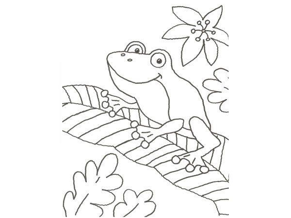Dibujo Para Pintar Con Niños De Una Rana En La Selva Animals To