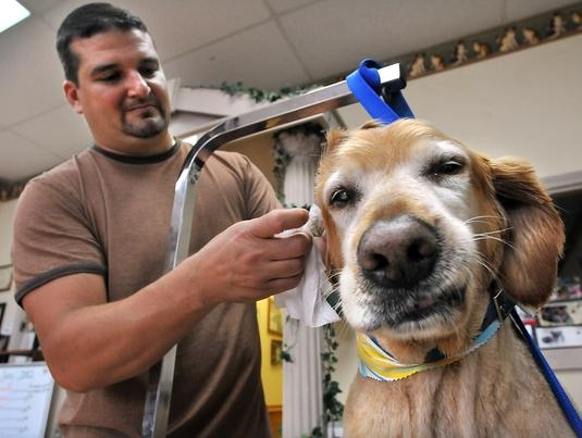 Dog Grooming Near Marlborough