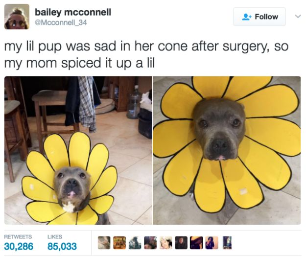 This mum who made her dog's cone into something wonderful. | 19 Dog Owners Who Are Just So Adorably Extra