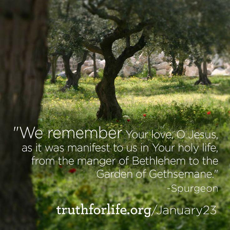 102 Best Ideas About Garden Of Gethsemane On Pinterest Gardens Christ And Savior
