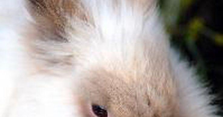 ¿Cómo cuidar conejos recién nacidos?. Cómo cuidar conejos recién nacidos. Si una mamá conejo y su nueva camada o cría de conejos huérfanos están bajo tu cuidado, necesitarás tomar algunas medidas para asegurarte de que los bebés se mantengan saludables y lleguen a ser adultos. Cuidar a conejos recién nacidos lleva tiempo y dedicación, pero es realmente gratificante ver a dichos ...