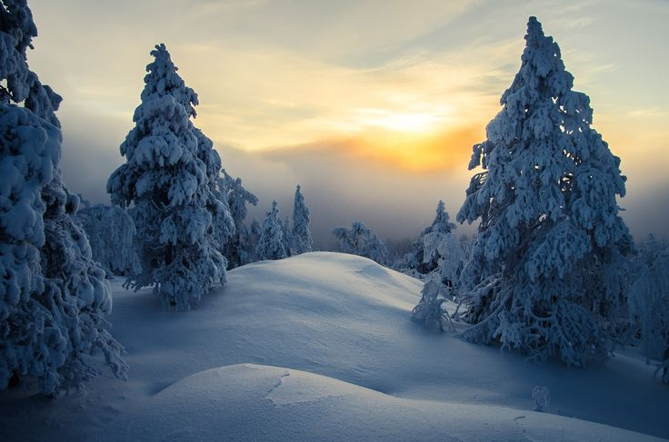 Trees Covered in Snow by Marko Jortikka on 500px