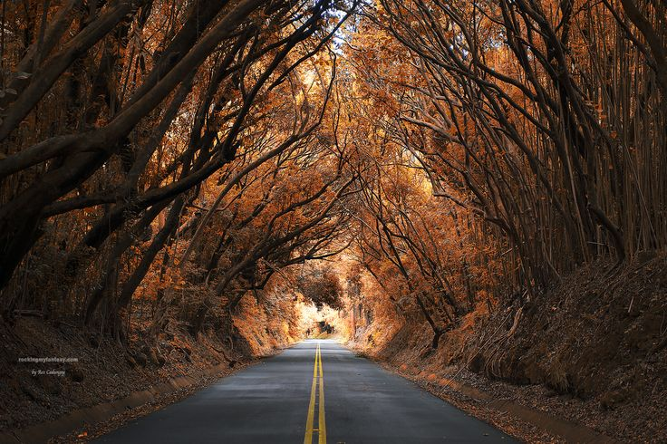 """The Tree Tunnel at JackAss Drive"", Nuuanu, Oahu, HI Rex Cadungog"