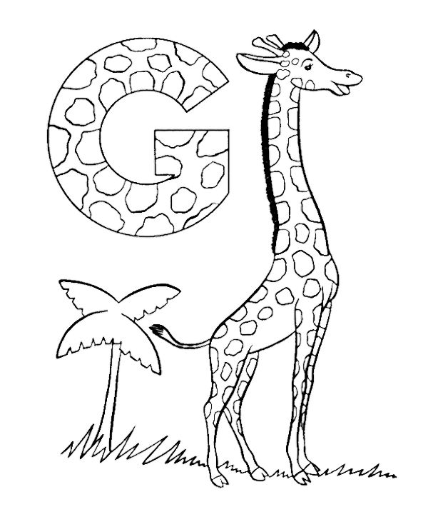 abc coloring sheets abc giraffe animal coloring page sheets animal letter g is for giraffe