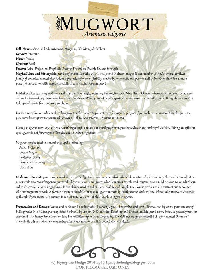 Free BOS page on Mugwort. Medicinal and Magical uses of Mugwort.