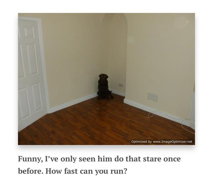 Terrible Real Estate Photos: Animal Edition
