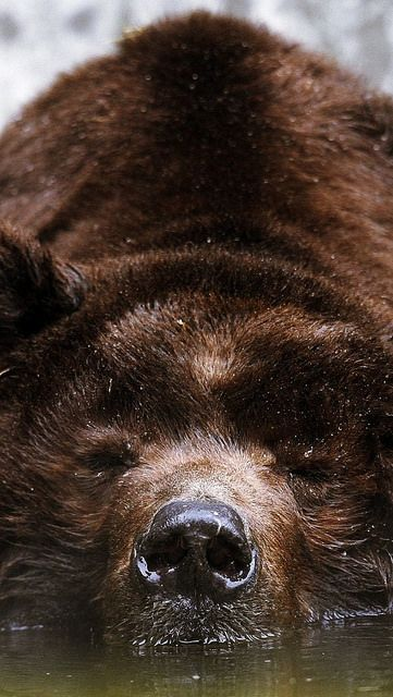 ⭐Brown bear⭐