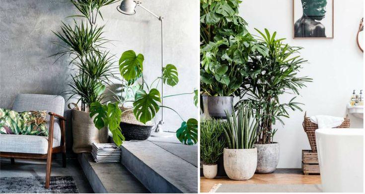 Rośliny domowe - 10 domowych roślin, które oczyszczają powietrze z toksyn