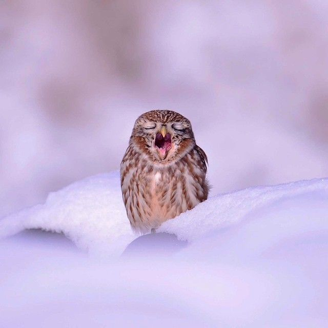 Best Photos That Catch My Eye Images On Pinterest Blues Eye - Oregon zookeeper skis to work after heavy snowfall finds the animals having a blast