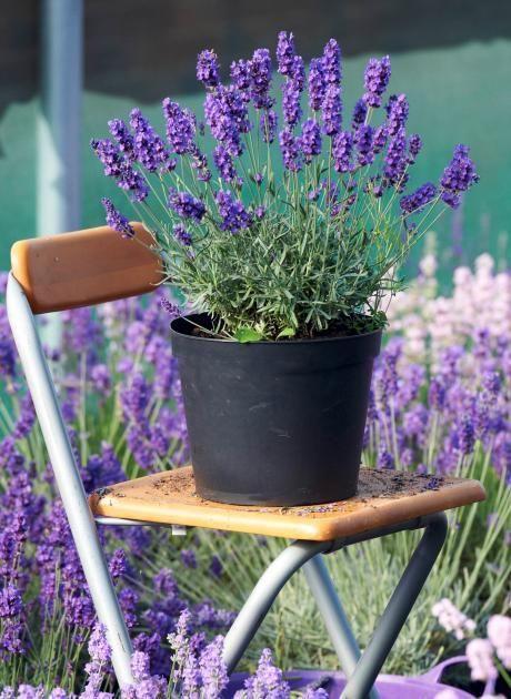 Trend Sparen Sie sich die j hrliche Balkonbepflanzung An diesen winterharten Pflanzen haben Sie mit etwas Pflege