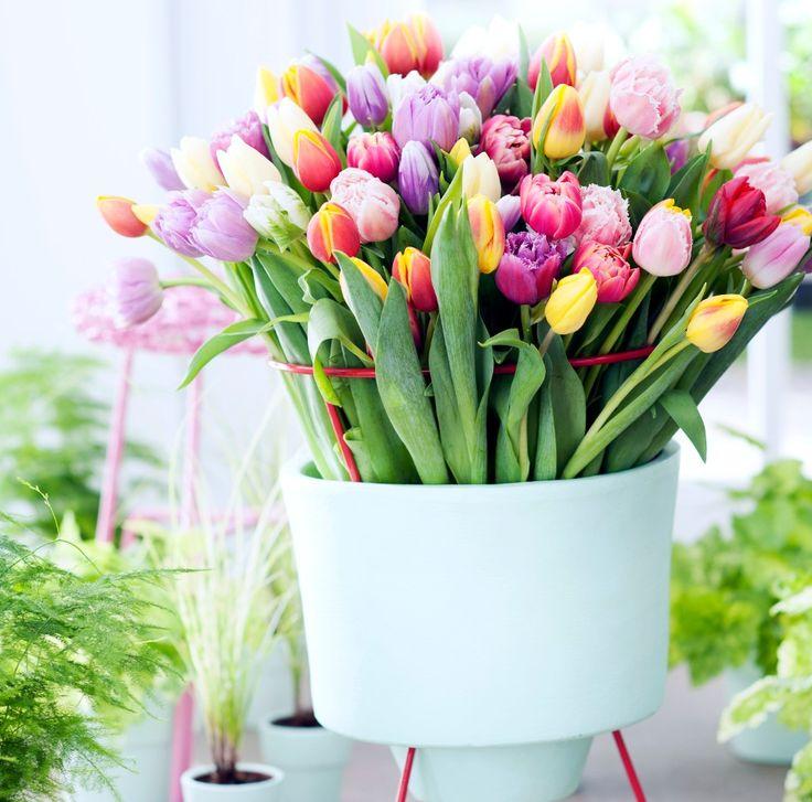 Los tulipanes brindarán a tu terraza un toque de frescura, además, son ideales para cualquier época del año.   #LópezCotilla #Guadalajara #FollowToFollow #GrupoLar #México #House #Colors #Tulipanes #Decoración #Terraza