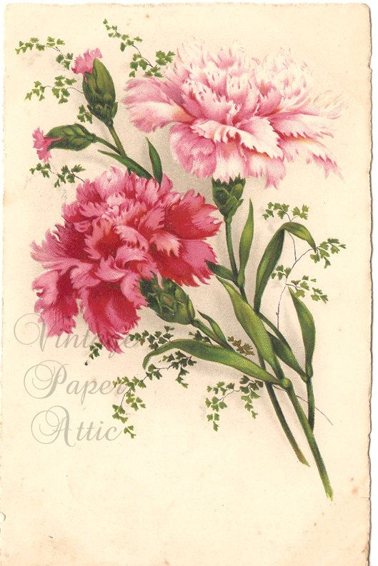 Pink Carnations Vintage French Postcard by VintagePaperAttic