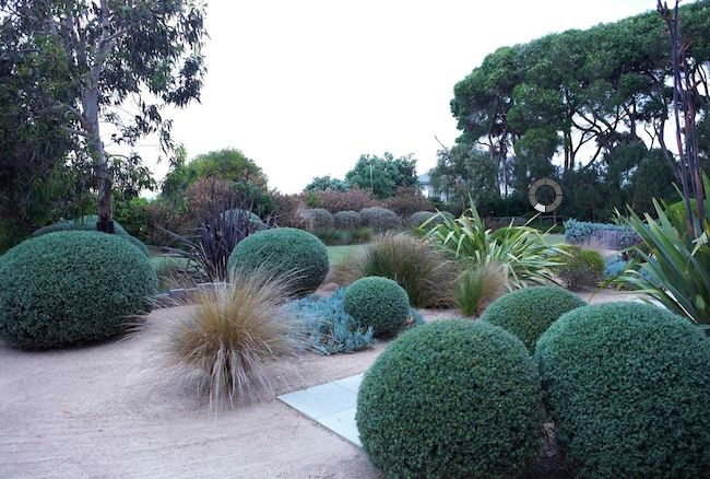 Love the clipped Westringa rosemary and the granetic sand