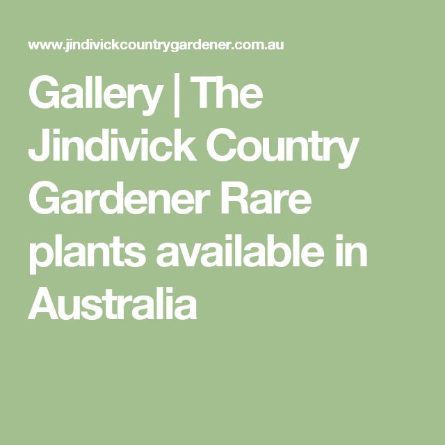 Gallery | The Jindivick Country Gardener  Rare plants available in Australia