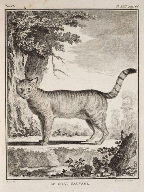 """Жорж-Луи Леклерк де Бюффон. """"Естественная история животных"""", середина XVIII века."""