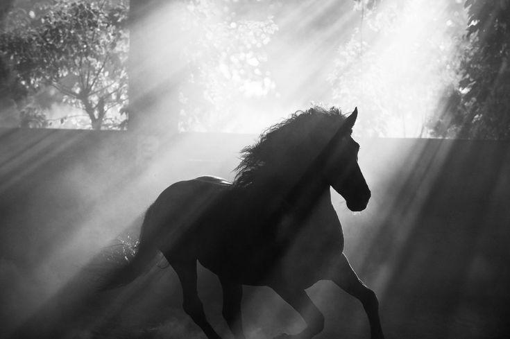 www.pegasebuzz.com | Equestrian photography : Melis Yalvac.