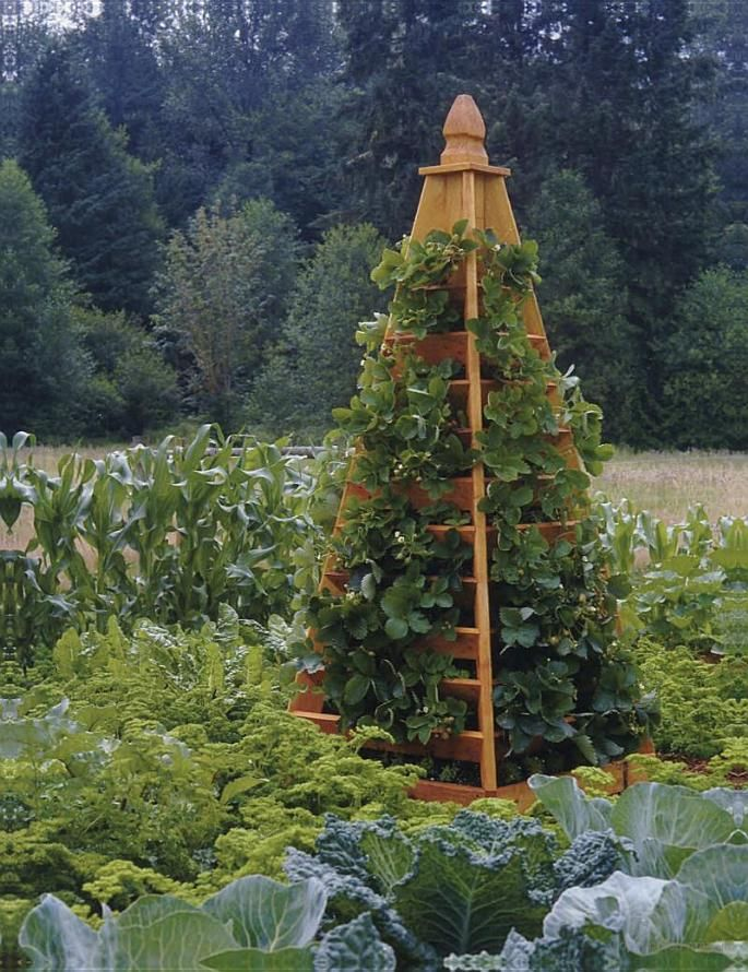 Strawberry Tower: 60 ft row of strawberries (90 plants!) in just 18 in square.  Amazing.