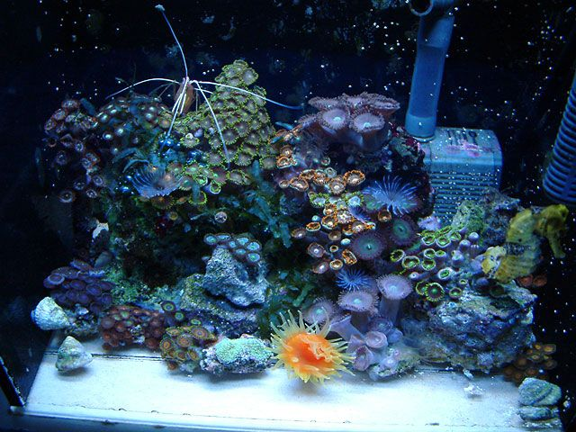 the seahorse and the reef Reef builders 28,057 views 16:02 relaxing aquarium 24/7 🐟🐠 relax study chill sleep meditation music - relaxing screensaver universe - calm relaxing music 282 watching.