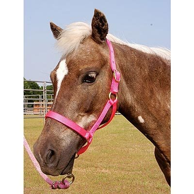24 best presents for the kids images on pinterest favours gifs pony halter fits ponies under 300 lbs 7 colors new ebay fandeluxe Gallery
