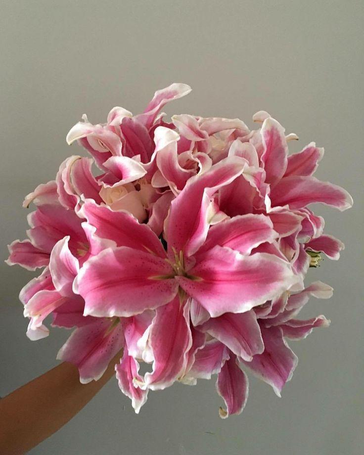 CBR431 weddings Riviera Maya strargazer bouquet/ ramo de stargazers