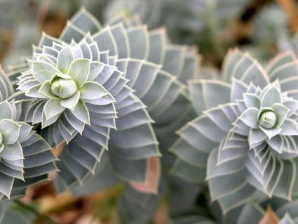 piante grasse sull'isola di Cres
