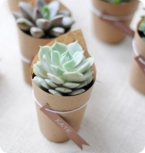 kraft wrapped succulent favours