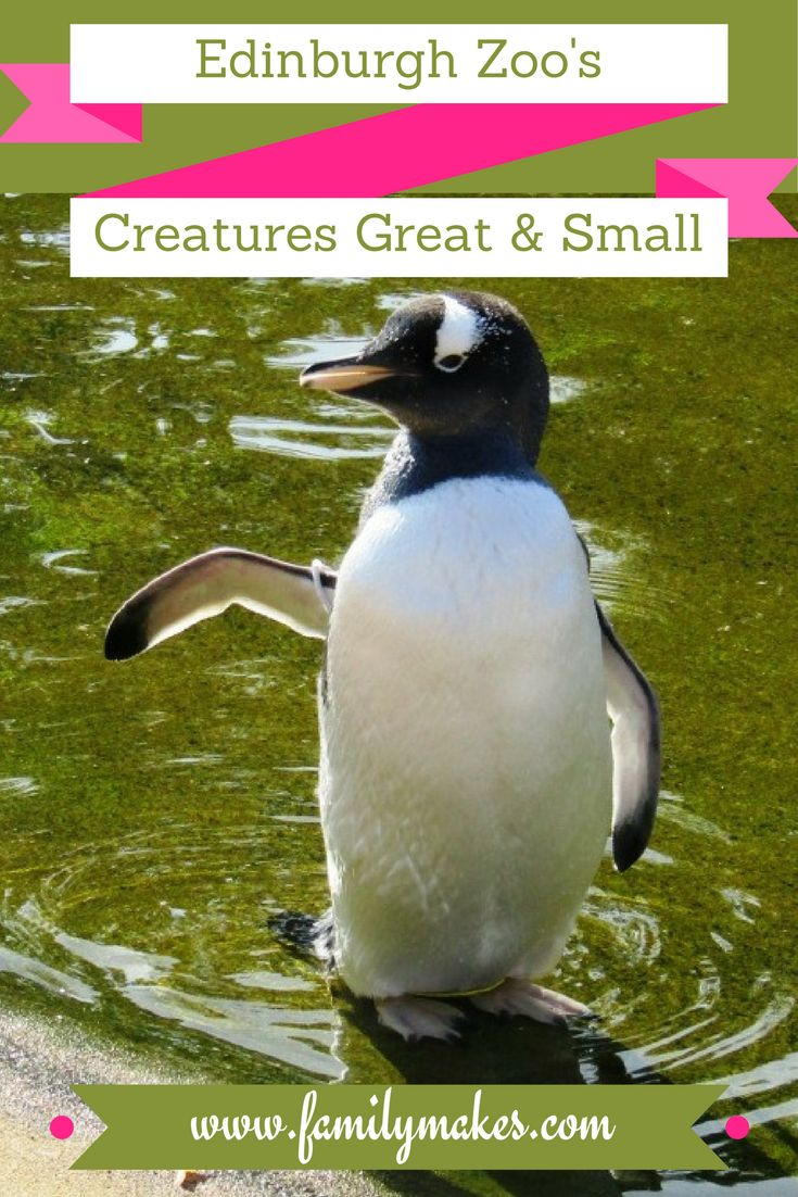 Click through for our review of Edinburgh Zoo, including the exhibition of Creepy Crawlies, and a gret video of all the cute animals!