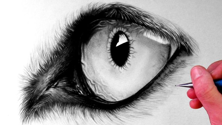 How to Draw a Wolf Eye | The Magic Of The Pencil ...