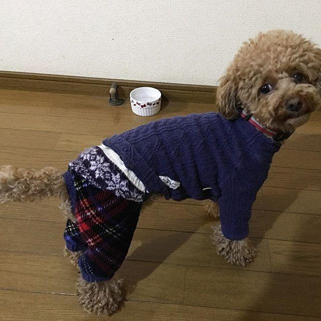 ・ ・ Xmas前に いやいや服を着せてみたら 拗ねて ほとんどハウスに入りっぱなし😪 たまに出てきて何とか一枚😅 服を着ての お爺ちゃん🐶と年賀状写真は とっても無理でした😂 ・ ・ ・ #トイプードル #toypoodle #dogstagram  #instadog #プードル#poodle#🐩#愛犬 #犬のいる暮らし #🐶#dog#clothes #服#イヤイヤ#年賀状#まだ