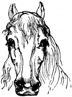 horse coloring pages are both fun and educational most of these horse coloring pages can