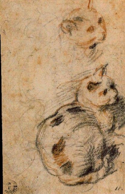 Federico Barocci (Italian, 1528-1612) - Studies of a Cat