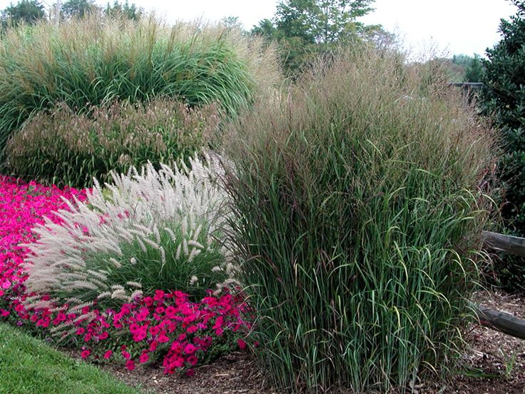 283 best garden borders beds images on pinterest for Ornamental grass landscape ideas