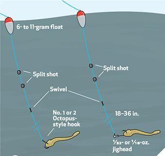 Best 20 salmon fishing ideas on pinterest fishing tips for Steelhead fishing tips