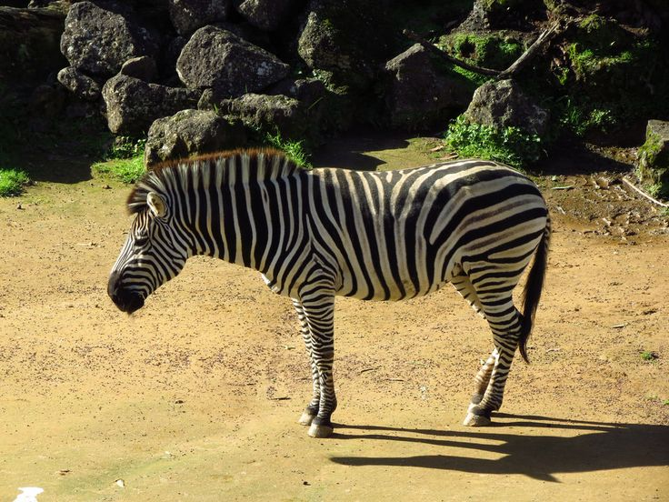 Auckland zoo | Auckland | Tripomizer Trip Planner