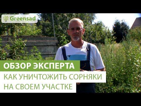 Как уничтожить сорняки  на своем участке